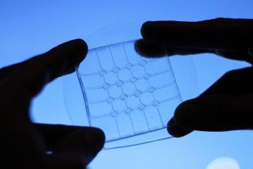 Transparent Sensor Array