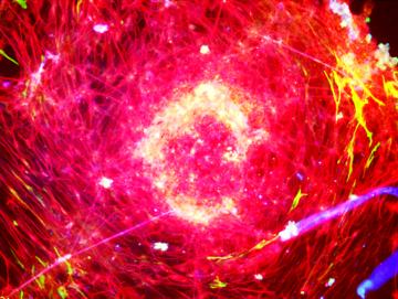 3D Bio-Printing Neural Tissue